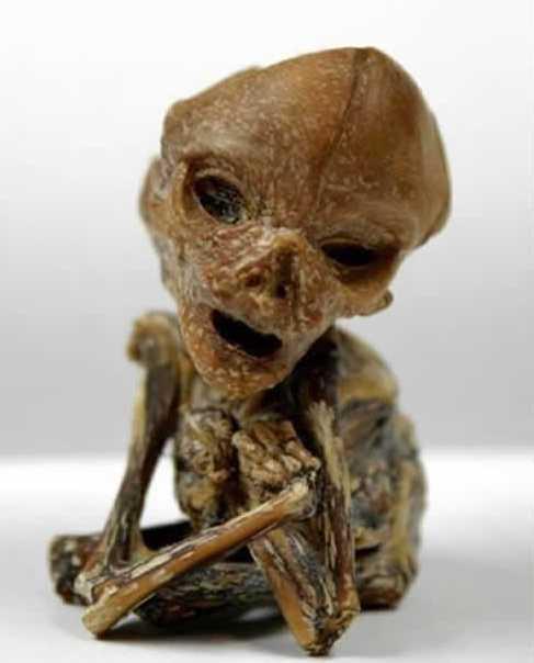 Resultado de imagen de Un Cuerpo Extraterrestre encontrado en Puerto Rico Lee mas en: http://misterio.tv/alienigenas/increible-un-cuerpo-extraterrestre-encontrado-en-puerto-rico