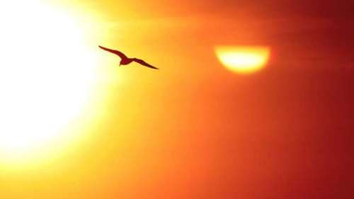 gaviota y sol